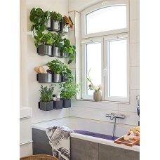 """Žaliosios augalų sienos rinkinys """"Cube Glossy"""" LECHUZA"""