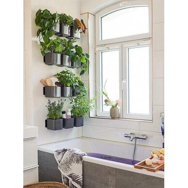 """Žaliosios augalų sienos rinkinys """"Cube Glossy"""" LECHUZA 2"""