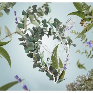 Kvapo papildymas maison Berger Fresh Eucalyptus 3