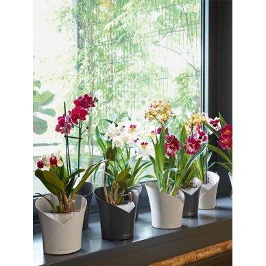 Vazonas Orchidea LECHUZA 2