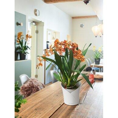 Vazonas Orchidea LECHUZA 3