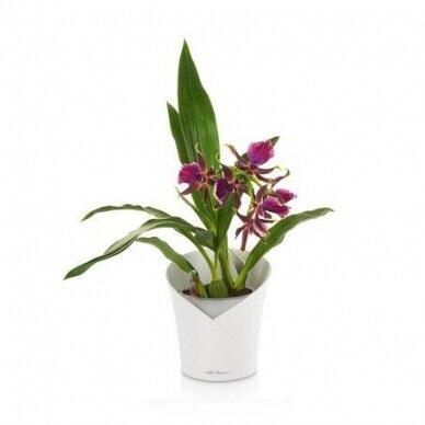 Vazonas Orchidea LECHUZA