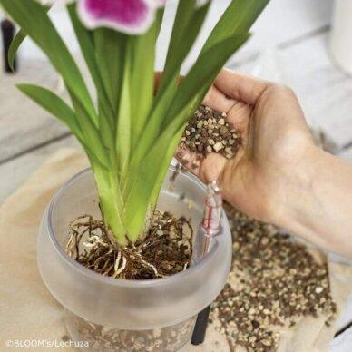 Substratas orchidėjoms ORCHIDPON LECHUZA 2