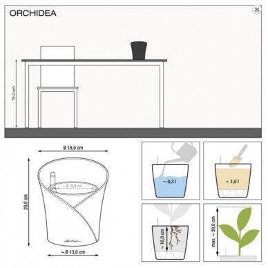Vazonas Orchidea LECHUZA 4